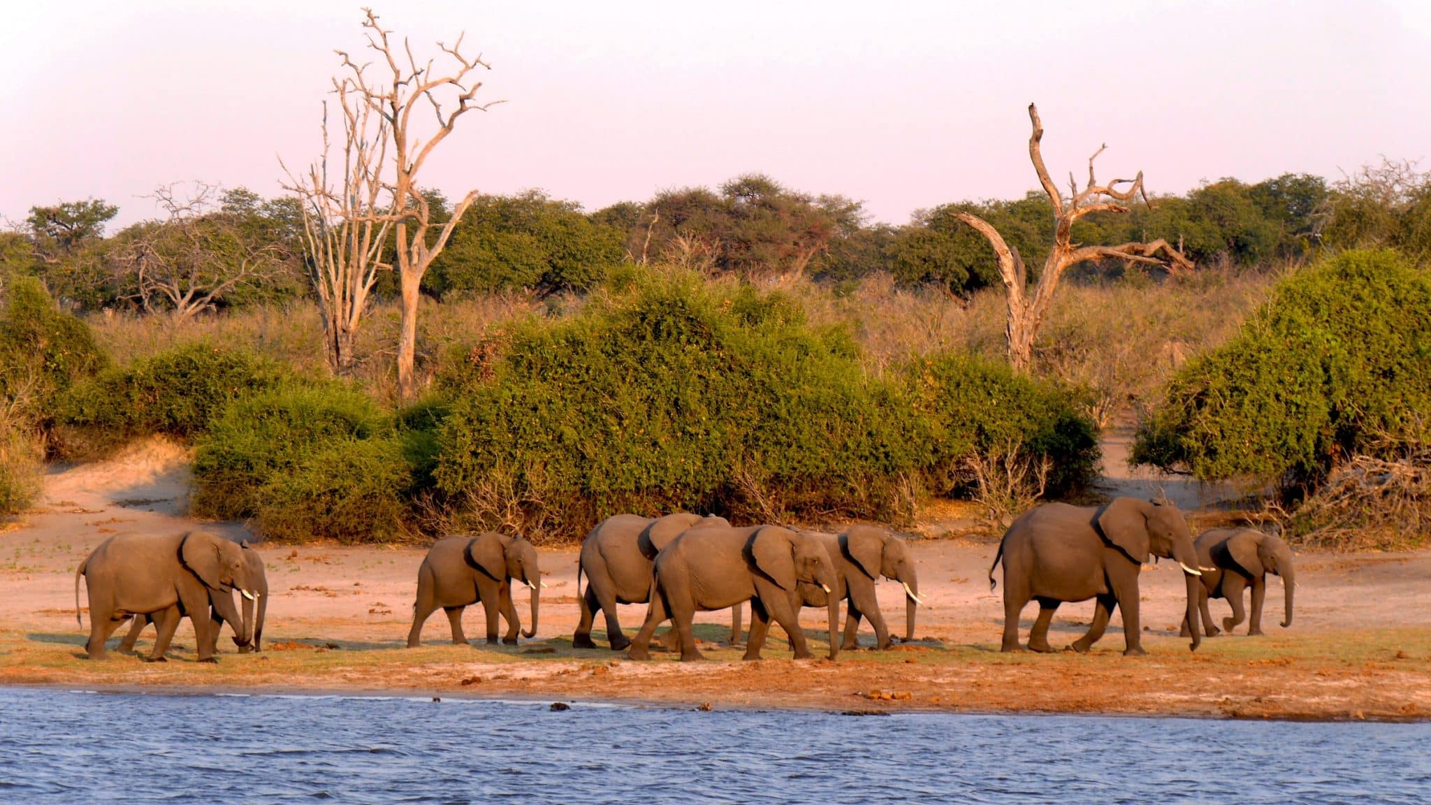 BotswanaChobe elephants
