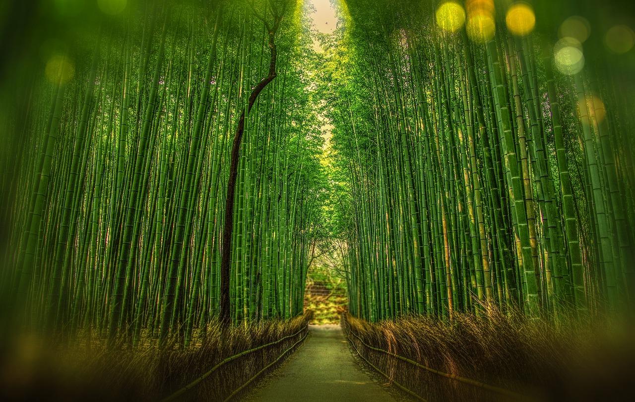 kyoto-bamboos