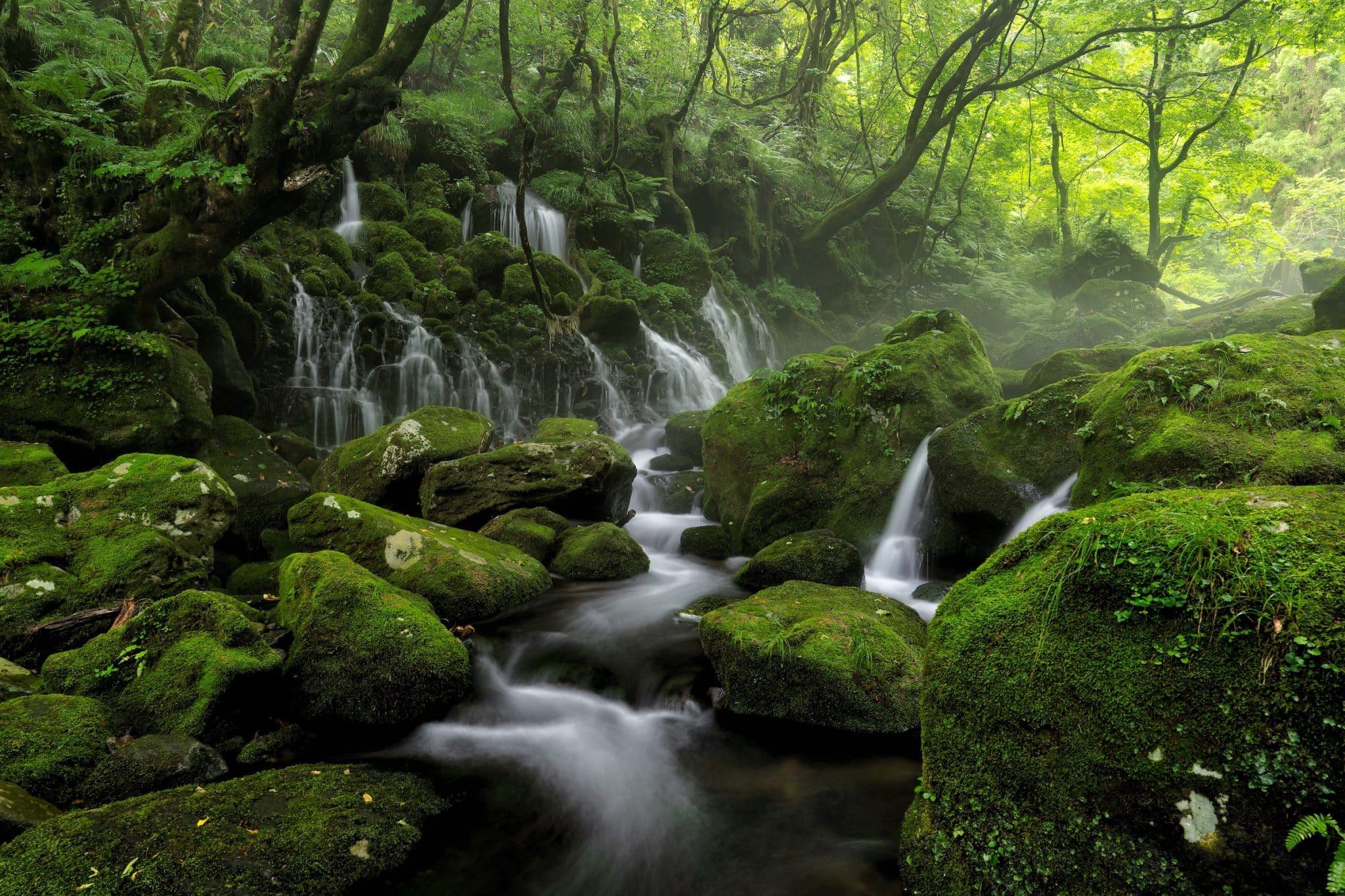 Japan rainforest