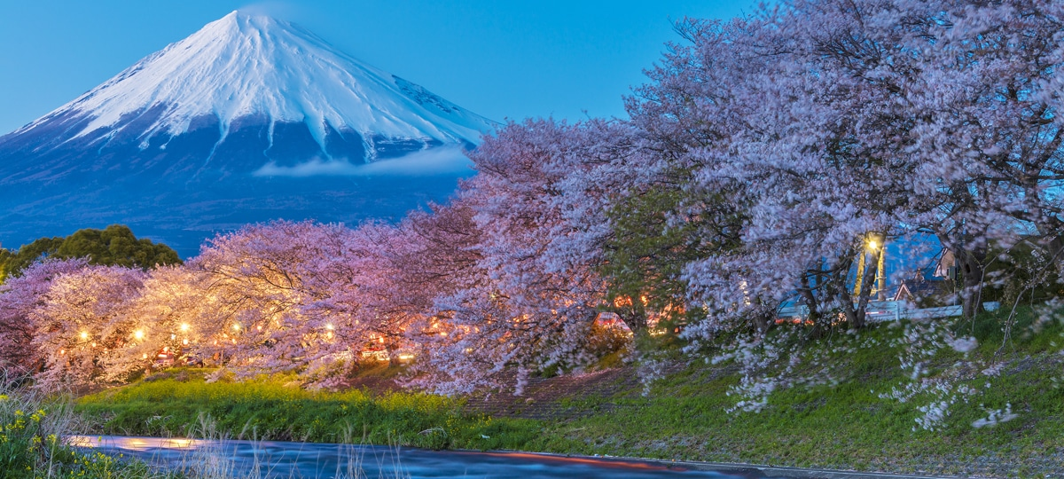 Japan Cherry Blossoms and Mount Fiji