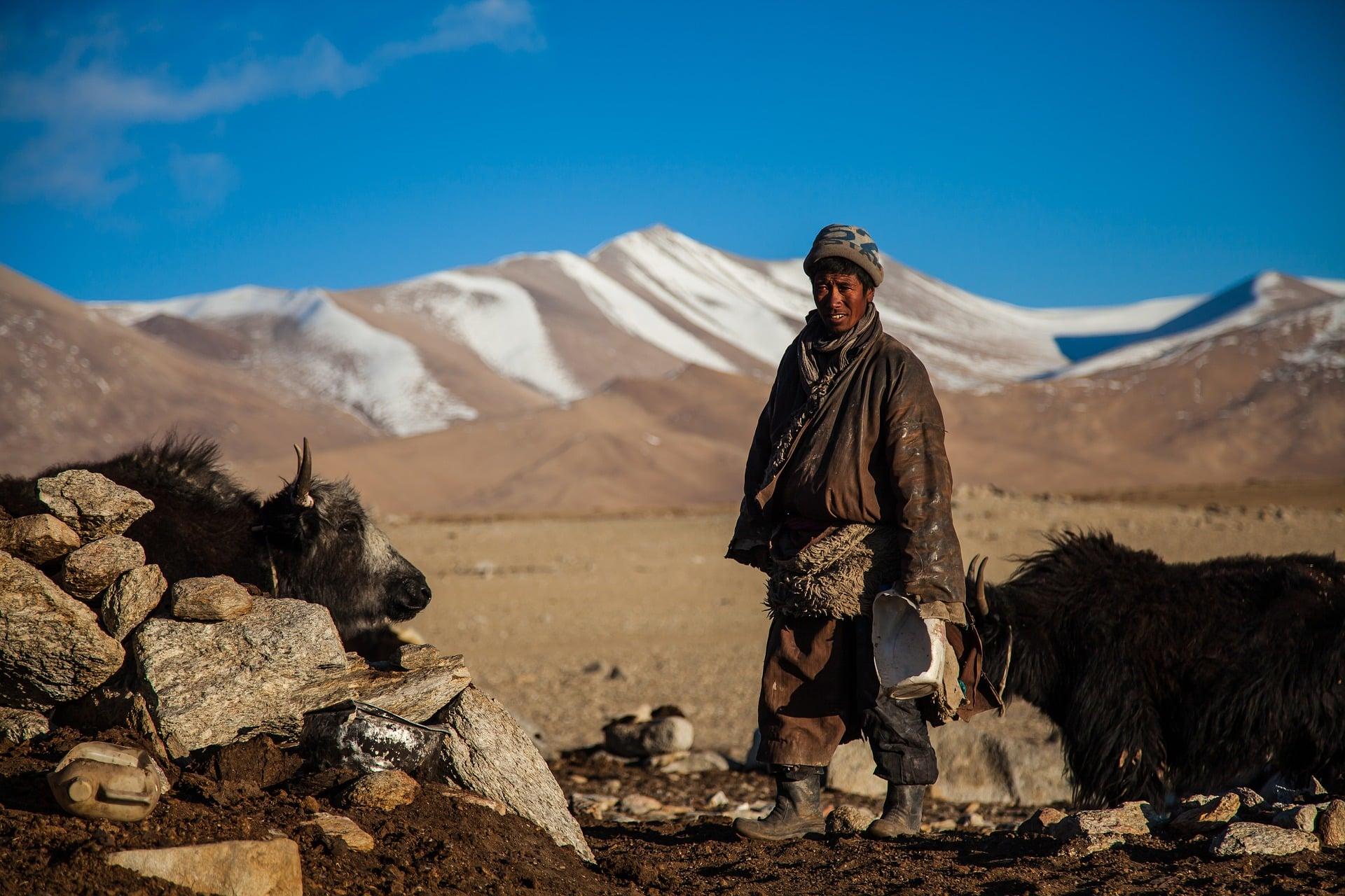 Mongolia nomad with yaks