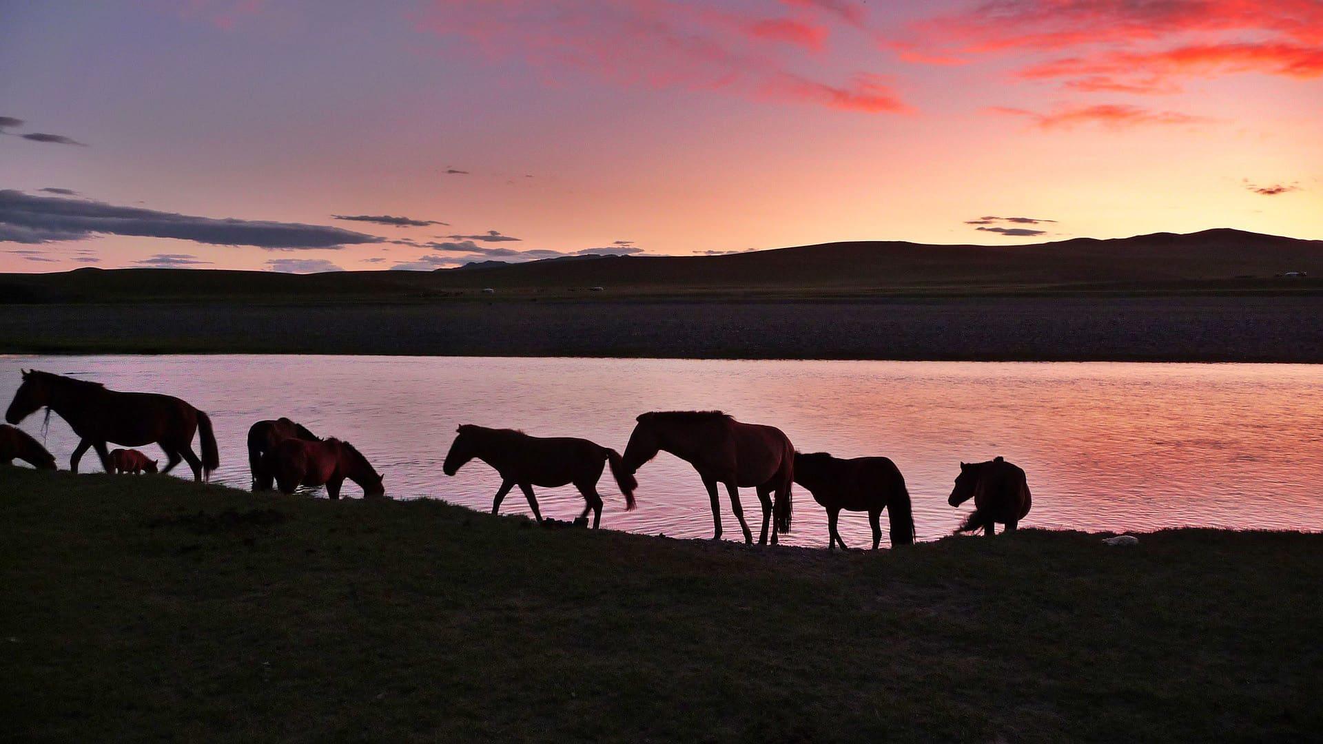 Mongolia sunset and horses
