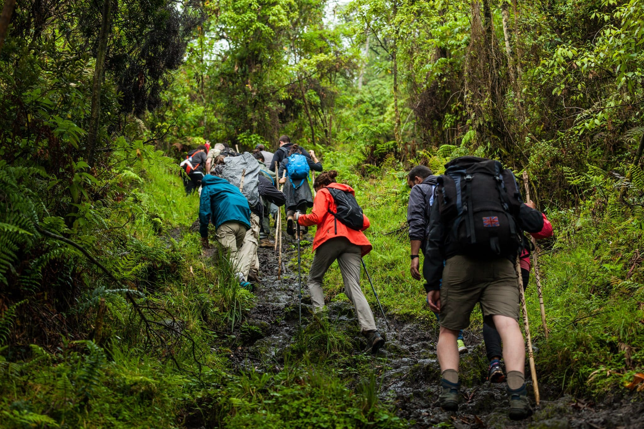 Democratic Republic of Congo - March 10, 2018. A group of people hiking up the volcano in Virunga Park