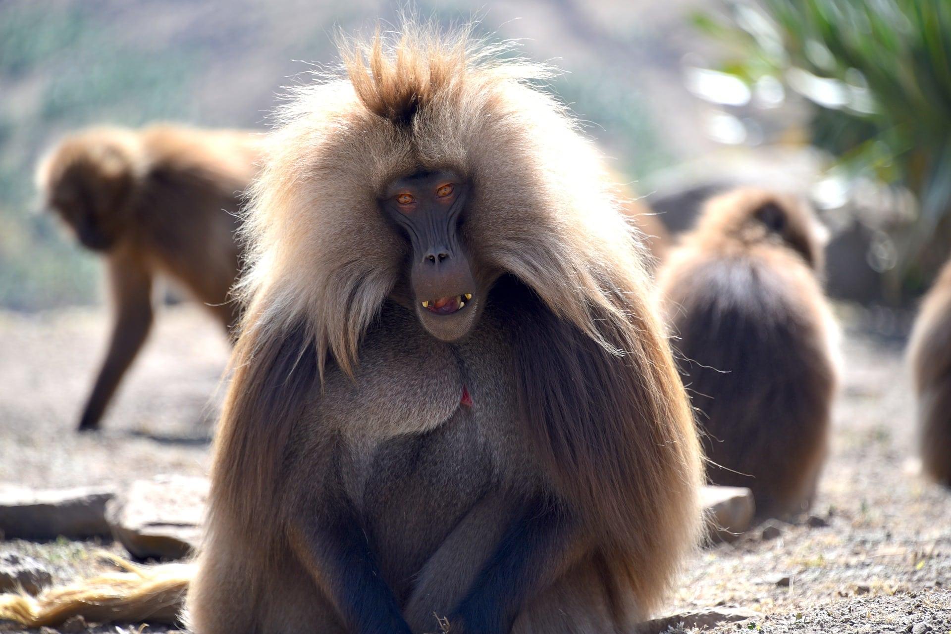 ethiopia-simien