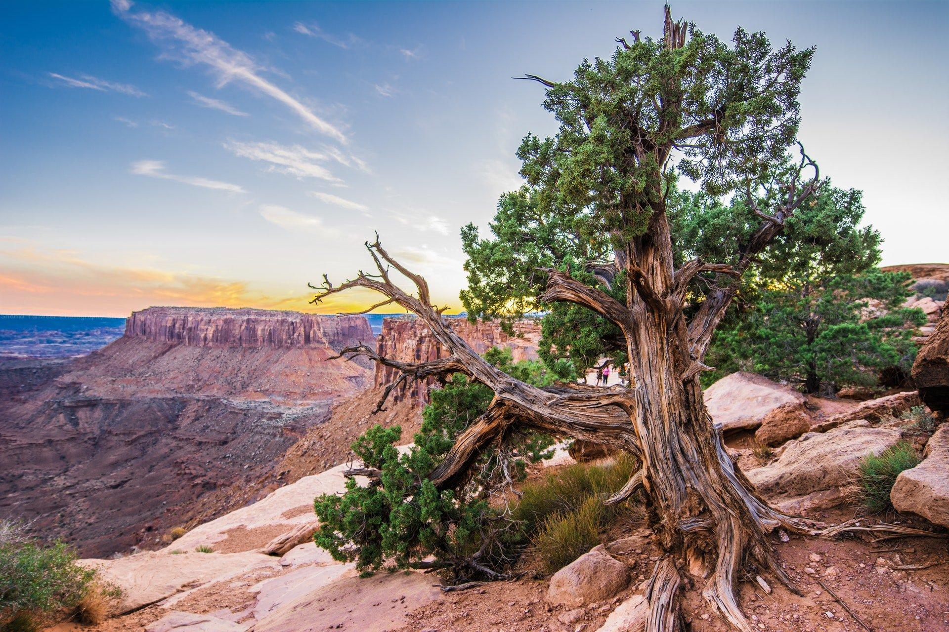 moab-utah-tree-mountains