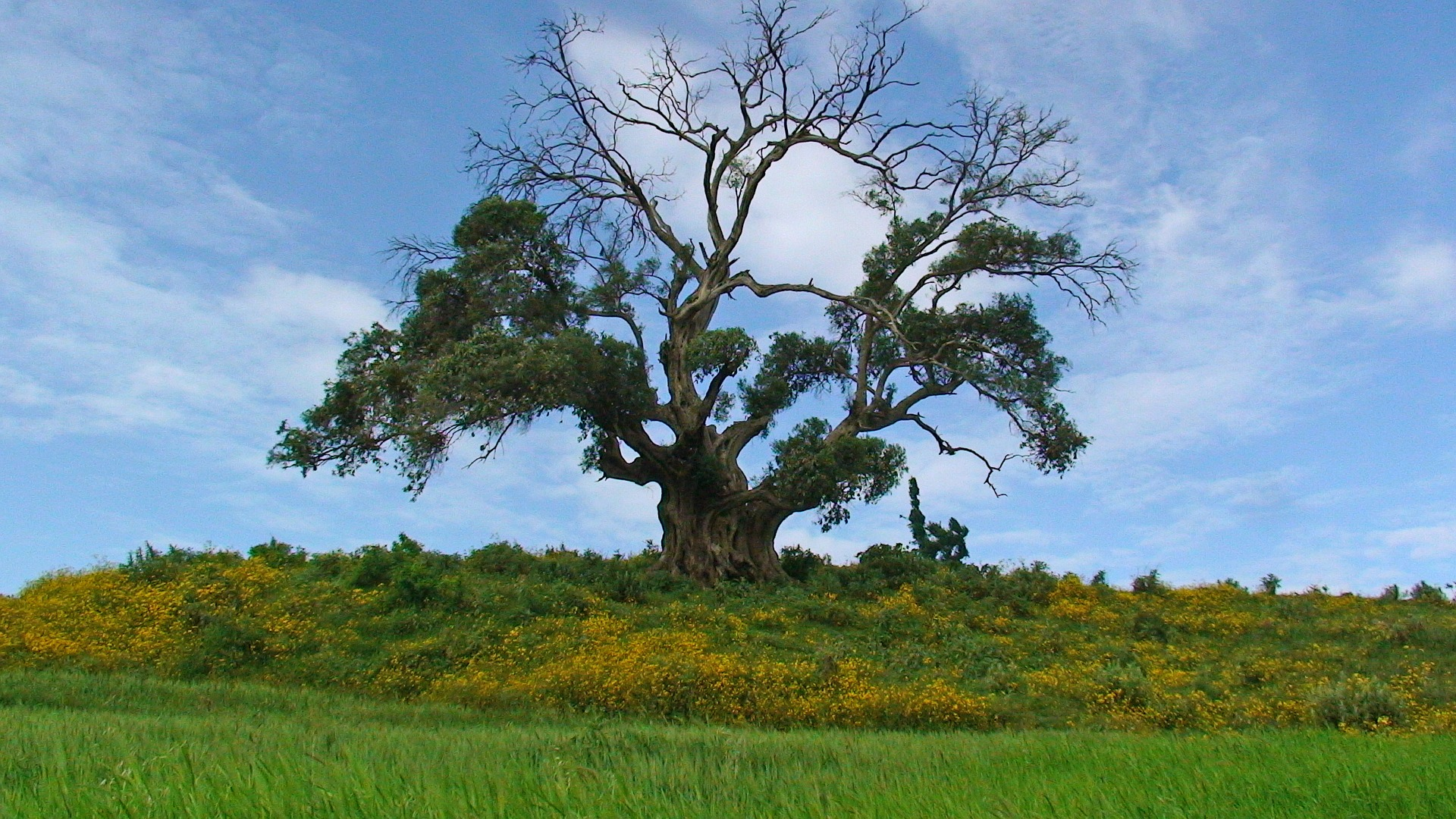 tree-ethiopia